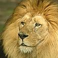 Zoo_leon1