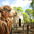 Zoo_llama1
