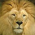 Zoo_leon