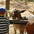 Zoo_chicos