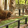 Zoo_llama