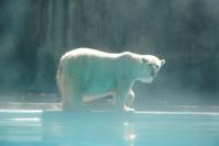 Zoo_polar1